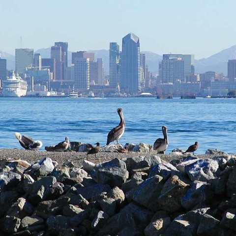City Scape of San Diego with Seagulls