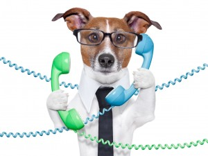 Dog with shirt, tie and glasses on two phones